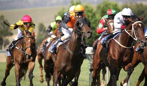 Horse Racing, Bath Racecourse